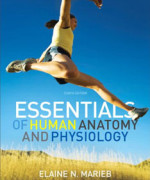 Essentials of Human Anatomy and Physiology, 10 edition: Elaine N. Marieb Test Bank