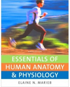 Essentials of Human Anatomy and Physiology, 9th Edition: Elaine N. Marieb Test Bank