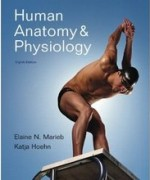 Test Bank for Human Anatomy and Physiology Marieb 8th Edition