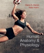 Human Anatomy and Physiology, 9th Edition: Elaine N. Marieb Test Bank
