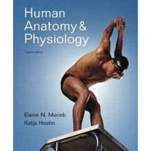 Human Anatomy and Physiology Marieb 8th Edition Test Bank