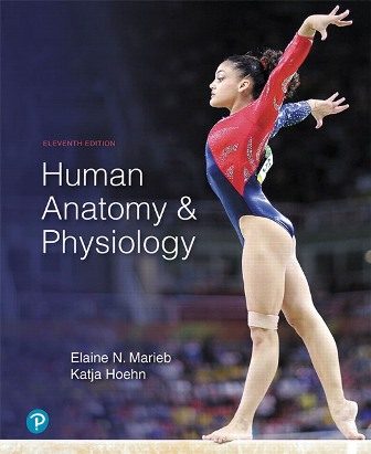 Test Bank for Human Anatomy and Physiology 11th Edition Marieb ISBN-10: 0134756363, ISBN-13: 9780134756363